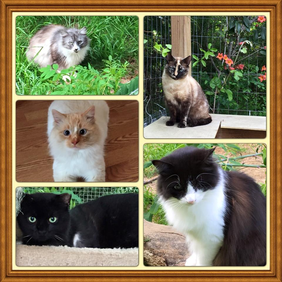 sanctuarycats